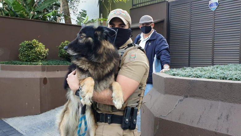 POLICIA MILITAR SALVA CACHORRO DE MAUS TRATOS EM BLUMENAU