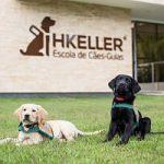 Escola de Cães-Guia Helen Keller anuncia nova direção